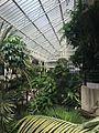 Barbican conservatory 2014 Wikimania .jpg