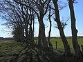 Bare trees - geograph.org.uk - 1229000.jpg