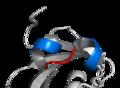 Basic helix loop helix.png