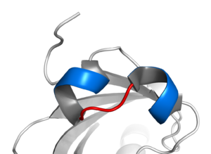 Basic-helix-loop-helix structural motif of pro...