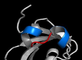 Basic helix-loop-helix - Image: Basic helix loop helix