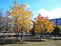 Batorego Poznan autumn.jpg