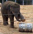 Baylor at Houston Zoo.jpg