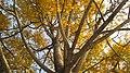 Beautiful Tree, Ishwardi.jpg