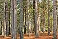 Beaver Dam Trail (1) (13229250545).jpg