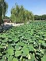Beihai Park IMG 4400 Beihai Lake - Jade Island.jpg