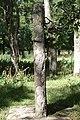 Bildsten Stenkumla 67 - KMB - 16000300017800.jpg