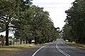 Bilpin NSW 2758, Australia - panoramio (1).jpg