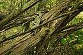 Biotopo inghiaie-natura morta.jpg