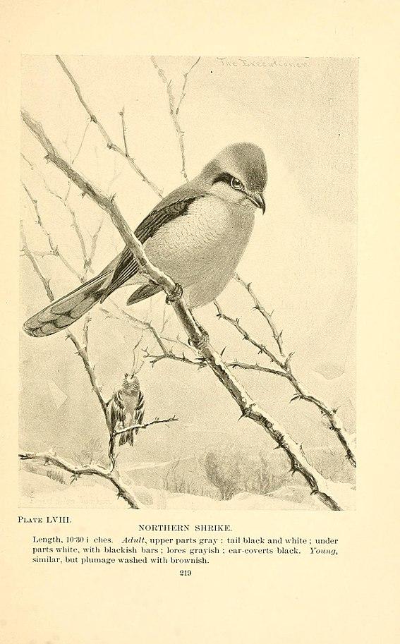Avian Bowl Contests | Animal & Food Sciences