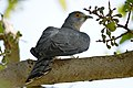Bird Chattak.jpg