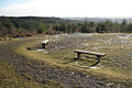 Bird of Prey viewpoint, Haldon Forest Park - geograph.org.uk - 1652052.jpg