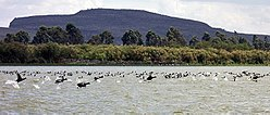 Birds at Lake Naivasha (300261994).jpg