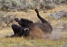 Geschwindigkeit datiert BüffelWahre Blutdarsteller datieren