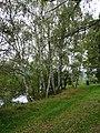 Blažejský rybník, přírodní památka (4).jpg