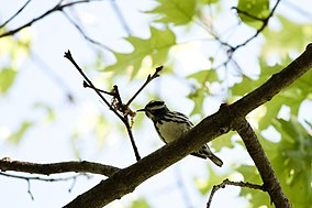 Wompatuck State Park - Wikipedia on