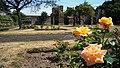 Blackfriars Ruins with Heritage Rose Garden Hereford UK.jpg