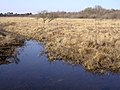Bog in the Bishop of Winchester's Purlieu, New Forest - geograph.org.uk - 141955.jpg
