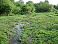 Boggy area by Latchmore Brook - geograph.org.uk - 204720.jpg