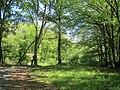 Bois, route de l'Aérodrome, Port-Sainte-Foy-et-Ponchapt, Fougueyrolles 2.jpg