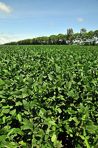 Bolivia soybean5 (4371317358).jpg