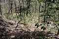 Boones Mounds, Arkansas DSC 0885 (8564719255).jpg