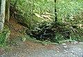 Bosc de la Comtessa 2011 02.jpg