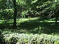 Boschetto del gorgazzo - panoramio.jpg