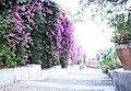 Bougainvillea-Hotel San Domenico-Taormina-Sicilia-Italy-Castielli CC0 HQ - panoramio - gnuckx.jpg