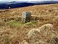 Boundary stone on Cat Law - geograph.org.uk - 361532.jpg