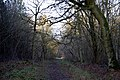 Bourne Woods, Lincolnshire - geograph.org.uk - 312134.jpg