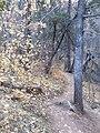 Boynton Canyon Trail, Sedona, Arizona - panoramio (64).jpg