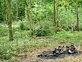 Brambles Bush and Burned out Bike - geograph.org.uk - 51758.jpg
