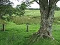 Bridleways west of Bwlch-Llan, Ceredigion - geograph.org.uk - 915126.jpg