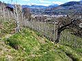 Brixen, Province of Bolzano - South Tyrol, Italy - panoramio (31).jpg