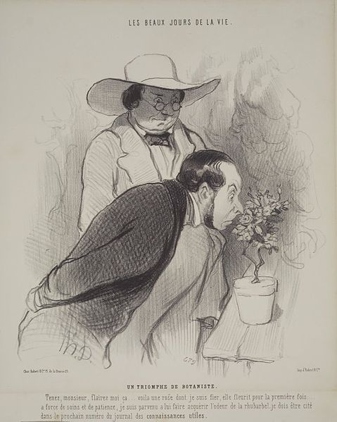 This is an image of a man and a woman inspecting a plant; the man being the botanist.