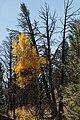 Buckhorn Rd-Little Beaver Creek Tr 9-26 (21809862231).jpg