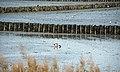 Buhnen Nordfriesisches Wattenmeer@Munkmarsch Sylt.JPG