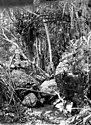 Bundesarchiv Bild 105-DOA0538, Deutsch-Ostafrika, Ulugurugebirge, Urwald.jpg