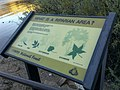 Butcher Jones Trail - Mt. Pinter Loop Trail, Saguaro Lake - panoramio (8).jpg