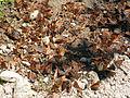 Butterflies Sawtooth National Forest.JPG