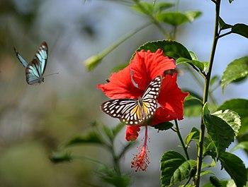 Butterflies from Adina Deer Park 1.jpg