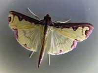 Butterfly by Mahbub Hasan.jpg
