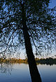 By the lake (4663792444).jpg