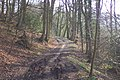 Byway through the Woods - geograph.org.uk - 44336.jpg