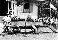 COLLECTIE TROPENMUSEUM Krokodil met doekoen-boeaja (tovenaar) TMnr 10006466.jpg