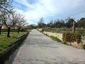 Camí del Pla de Senija.JPG