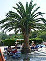 Camping Mareblu at the pool - panoramio.jpg
