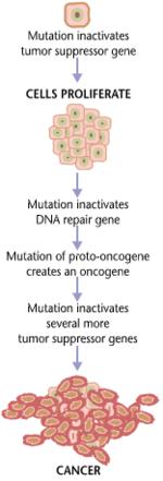 Carcinogenesis - Wikipedia