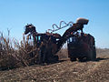 Cane harvester at work.jpg
